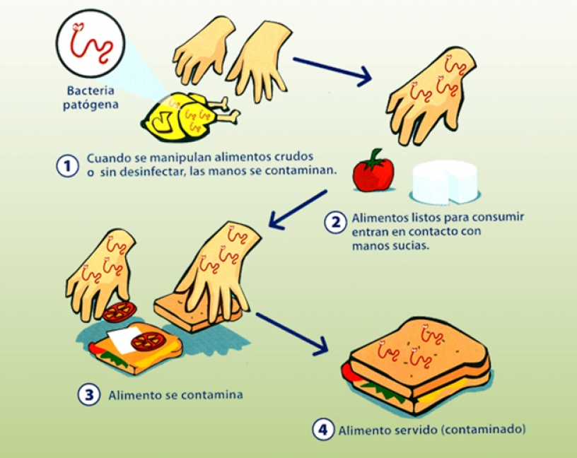 La CE actualiza el Reglamento 852/2004 sobre higiene de los productos alimenticios
