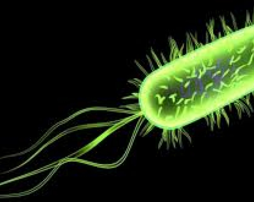¿Será posible detectar E.coli en alimentos con el teléfono móvil?