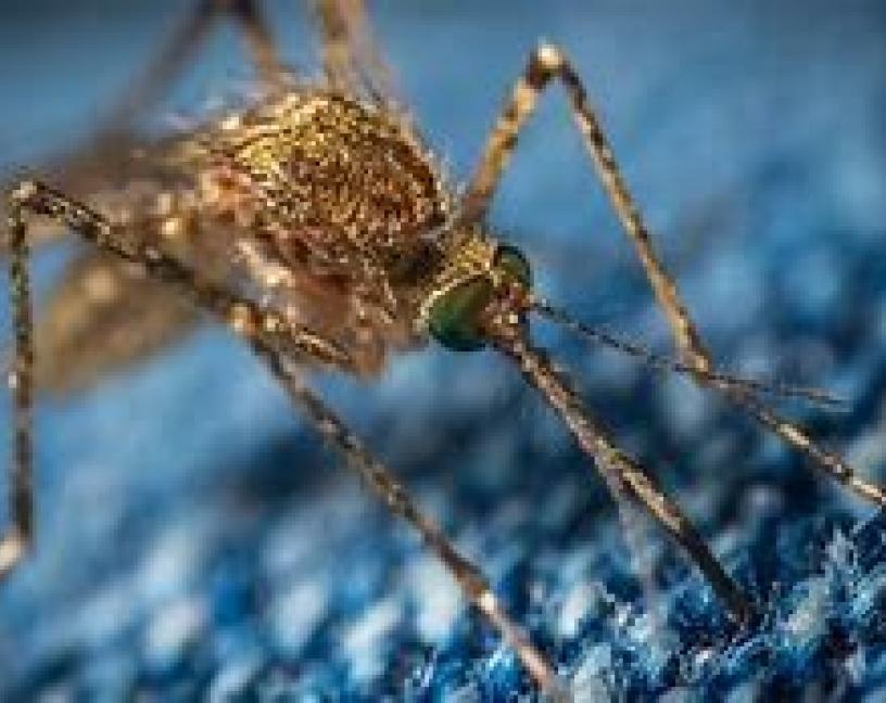 Mosquitos invasores en Europa, ¿a qué animales pican?