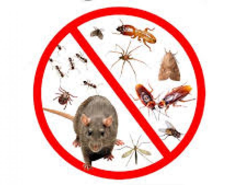 Las plagas en entornos alimentarios