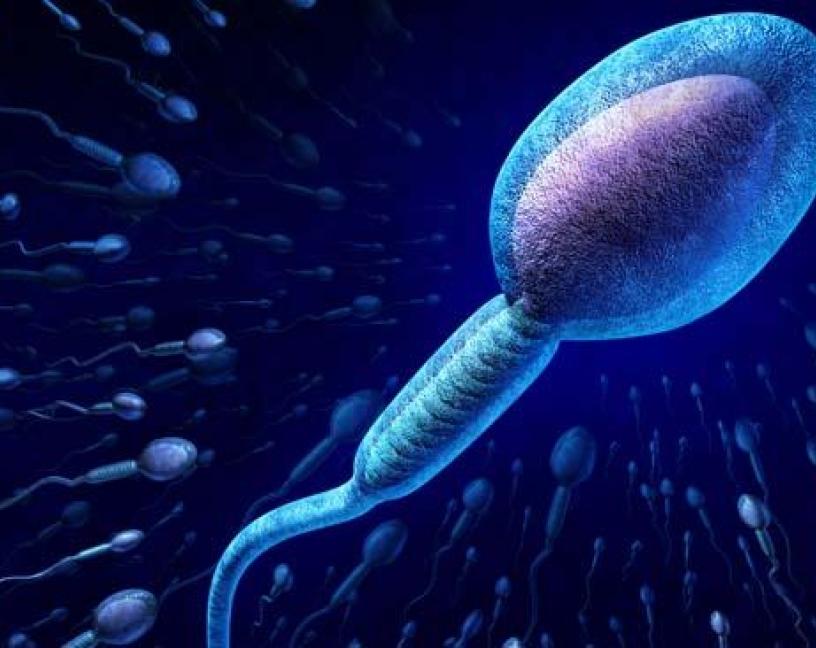 Plaguicidas y alteración de la función reproductiva masculina