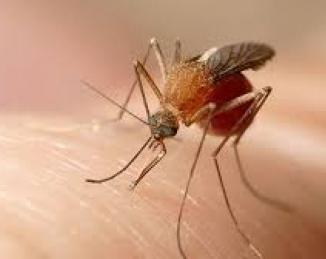 Los insectos voladores