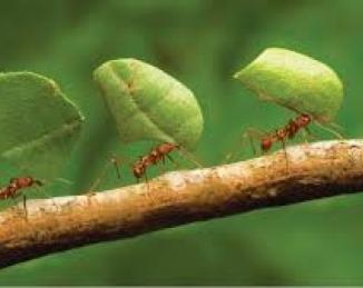 Las hormigas también generan gases de efecto invernadero