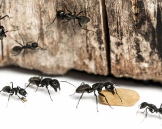 Diez maneras de prevenir los problemas de plagas en el entorno alimentario