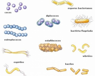 La contribución de la cadena alimentaria a la resistencia bacteriana