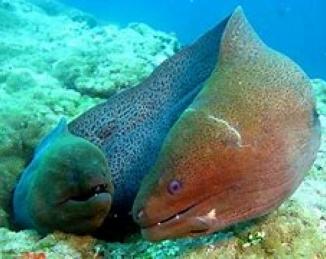 La ciguatera: biotoxinas marinas emergentes en la UE