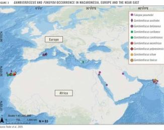 Intoxicación por ciguatera: la FAO presenta su informe científico