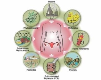Disruptores endocrinos entre los biocidas