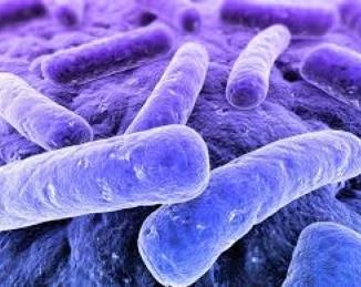 La Legionella manipula nuestras células
