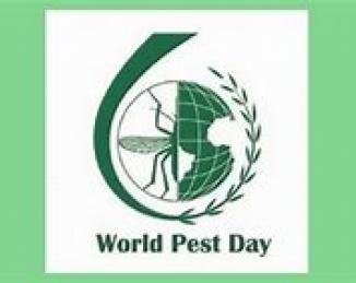 Día Mundial del Control de Plagas: las plagas que ha disparado el coronavirus