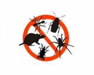 Previsión de aumento de mosquitos en Cataluña por las lluvias de agosto