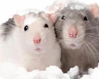 Cerrar el paso a ratas y ratones: la exclusión como estrategia segura y eficiente